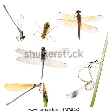 animal set, dragonfly and damselfly collection isolated