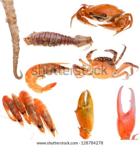 animal set, shellfish seafood crab and shrimp collection isolated on white