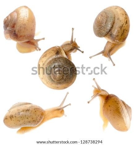 animal set, snail collection isolated