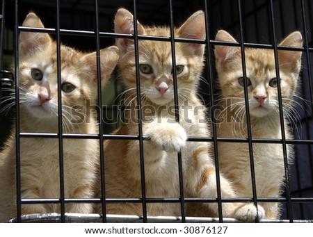 Animal Shelter Orphaned Pet