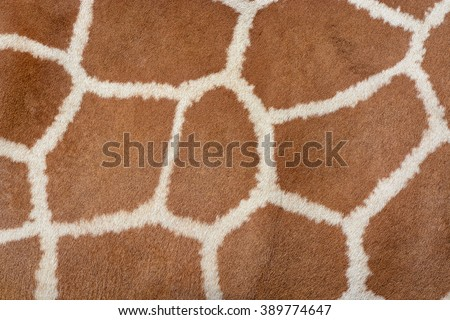 Animal skin background of the patterned fur texture on an African giraffe #389774647