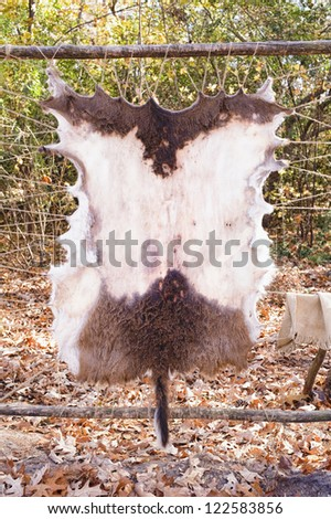 Animal skin stretched and drying
