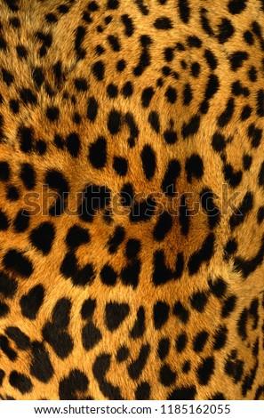 Animal Skin Texture #1185162055