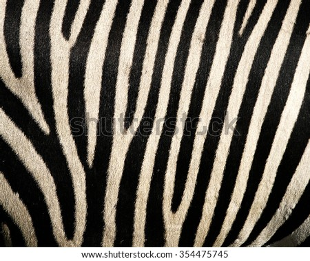 Animal skin texture for concept of nature #354475745