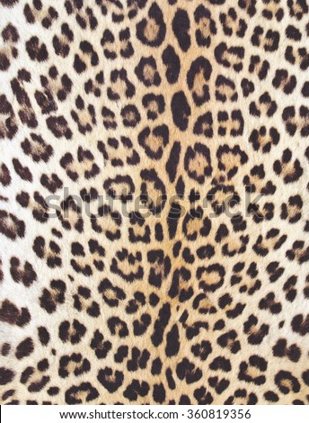 Animal skin texture for concept of nature #360819356