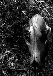 Animal Skull Found in Nature