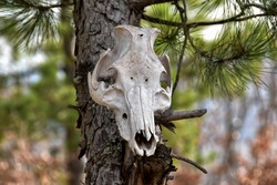 animal skull hanging from a tree