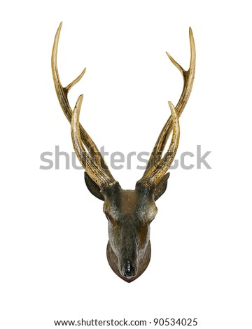 Animal skull with horn
