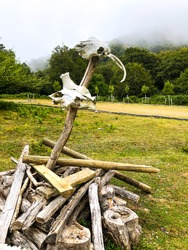 Animal skulls in wood in the middle of a dense forest in Spain.
