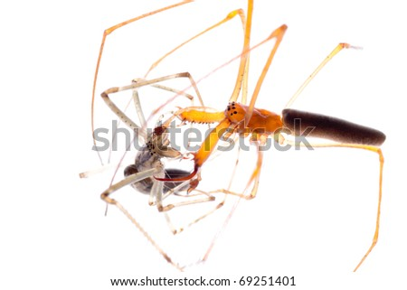 animal spider fight isolated on white