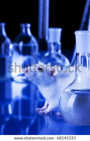 Animal testing in laboratory. rat in blue laboratorym animal experiments