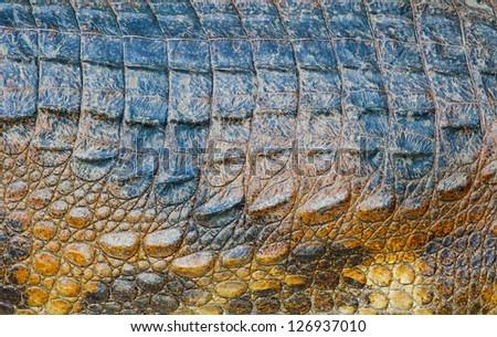 Animal Texture: Alligator skin Texture