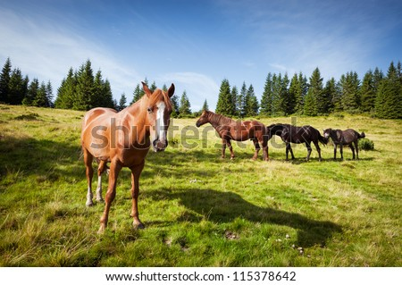 animal theme. horses graze