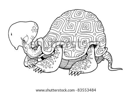animal turtle contour illustration - stock photo
