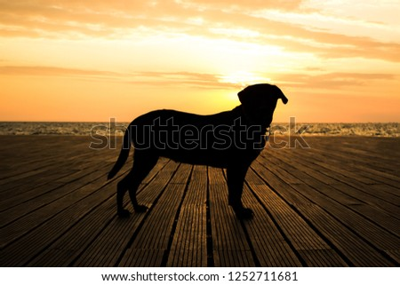 animal wallpaper concept Labrador dog portrait of staying body black shape silhouette opposite to sunshine of sunset bright orange light romantic atmosphere in sea shore line waterfront district place #1252711681