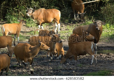 animals #628583582