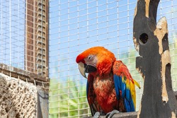 Animals. A parrot with colorful coloring sits on a perch. Close-up, blurry background. Stock photo
