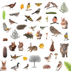 animals and birds isolated on a white background