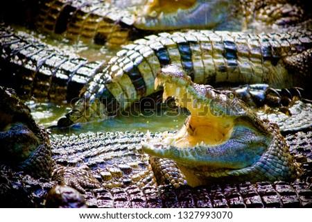 Animals and Wildlife #1327993070