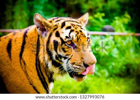 Animals and Wildlife #1327993076