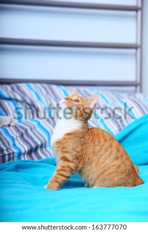 Animals at home. Red cute little baby cat pet kitten on bed turquoise blanket