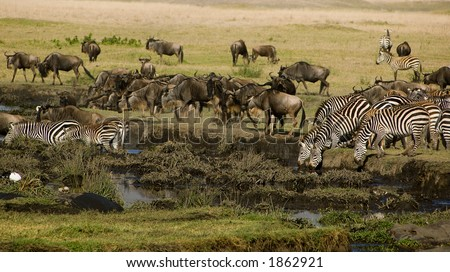 Animals at the water hole