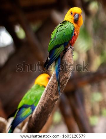 Animals, Birds, Nature, Vacations, Nature