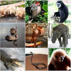 Animals collage with nine photos Thailand