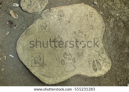 Animals Footprint #555231283