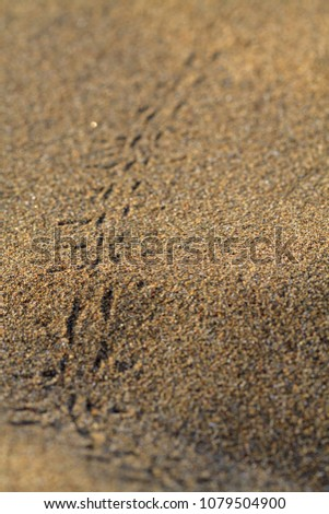 Animals footprints on rippled sand in desert. #1079504900