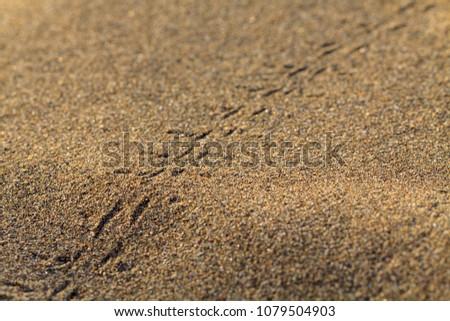 Animals footprints on rippled sand in desert. #1079504903
