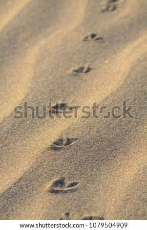 Animals footprints on rippled sand in desert. #1079504909