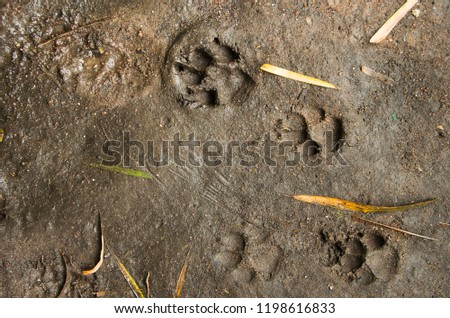 Animals  footprints on the ground  #1198616833