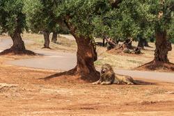 Animals from the Fasano safari zoo. Puglia