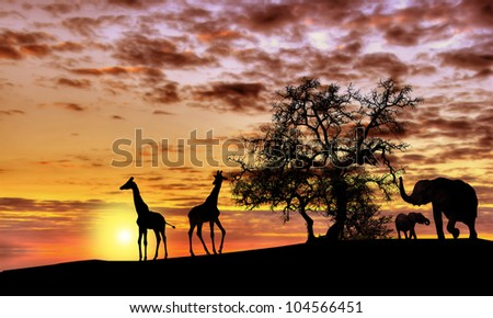 Animals in Africa at sunset silhouette
