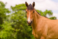 Animals in Wildlife and Horses