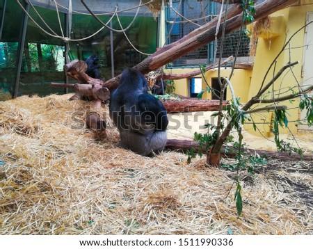 Animals in zoo in Zurich #1511990336
