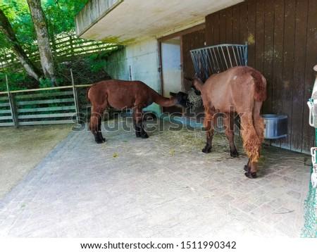 Animals in zoo in Zurich #1511990342