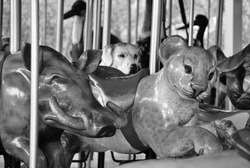 Animals on a carousel.
