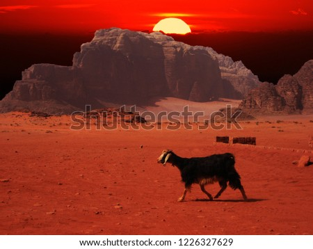 Animals on the dessert with the view of sunset.
