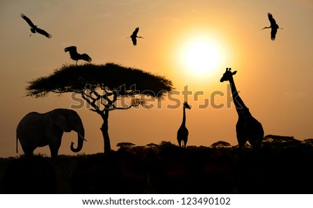 Animals silhouettes standing over sunset on safari in Africa. Elephant, Giraffes, Birds