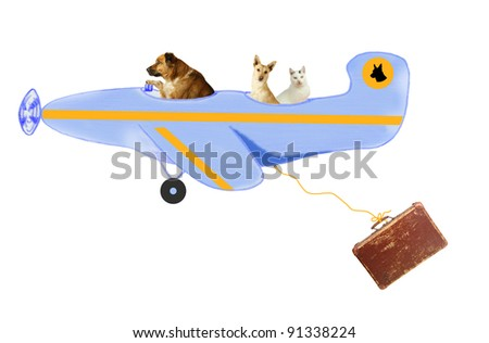 Animals, two dogs and a tomcat, on air travel - stock photo