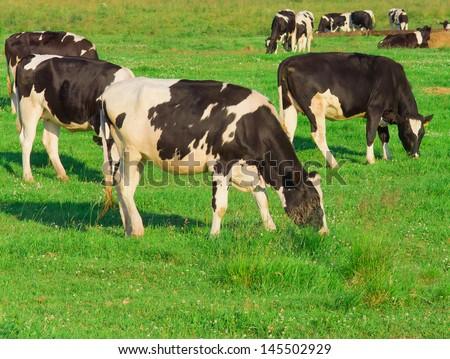 Animals View Grazing