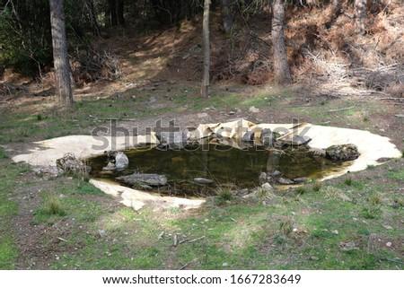 Animals water pond in forest Stok fotoğraf ©