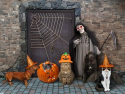 Animals witth a grim reaper are sitting near a door of an old castle for Halloween.