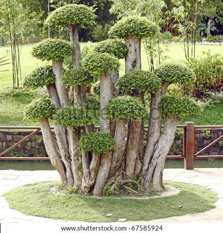 Ann image of boxwood shrubs trimmed as decorative ornament plant in a park.
