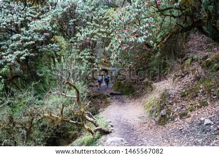 Annapurna Base Camp Trekking the spectacular trekking trails in Nepal #1465567082