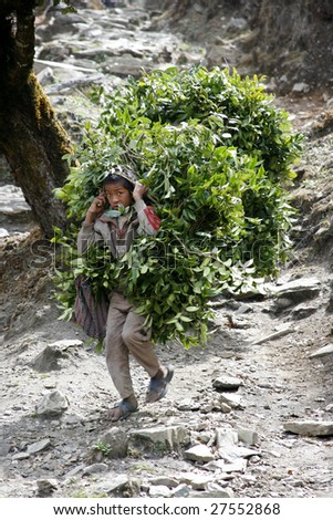 ANNAPURNA, NEPAL - APRIL 3: An unidentified young boy carries feed to his cattle in Annapurna, Nepal April 3, 2008. Annapurna trail is well known for its trekking activities.