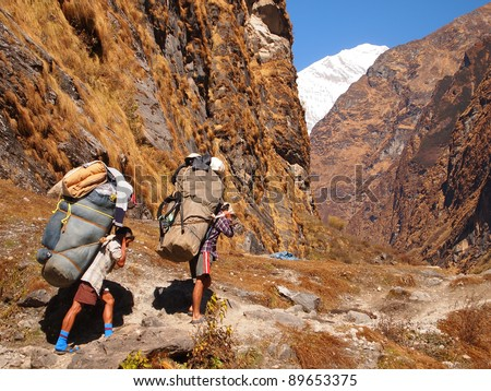 Annapurna, Nepal Porters carrying heavy load on his back.
