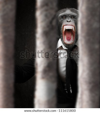Annoyed Monkey Behind Bars, Indoor